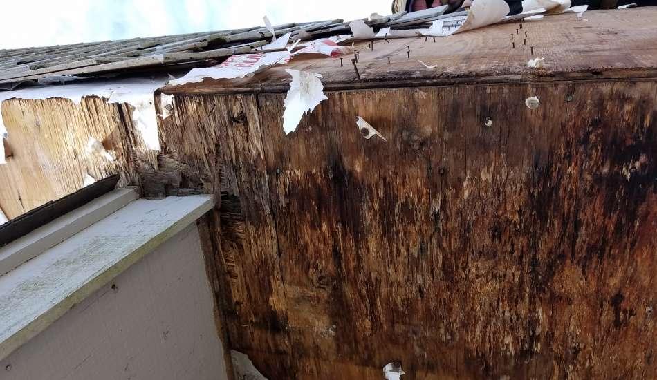 Rot Repair and Carpentry